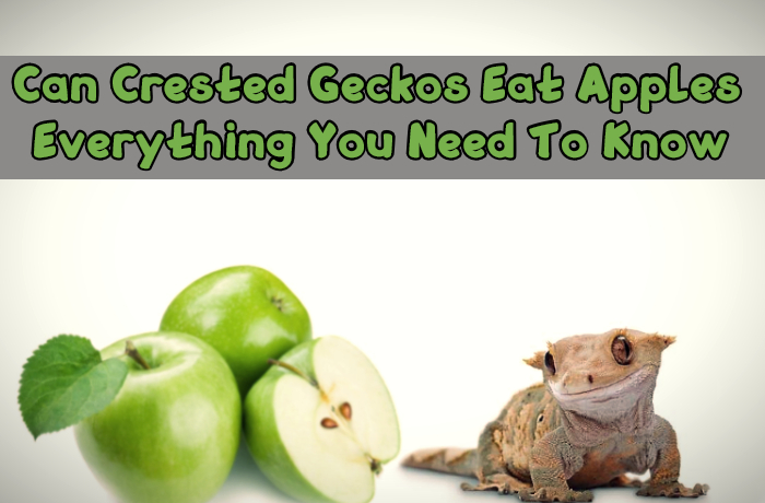 Can Crested Geckos Eat Apples